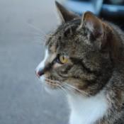 Mishka (Cat) in profile