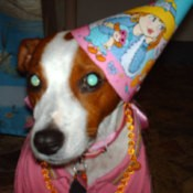 A dog with a cone birthday hat on.