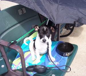 Jack Russell Terrier Mix Photos | ThriftyFun