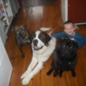 Three dogs and a boy, including Sugar (Pitbull)