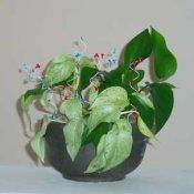 Plant decoration - sparklers.