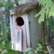 Rustic birdhouse.