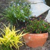 Broken terra cotta planter used to retain garden plant.