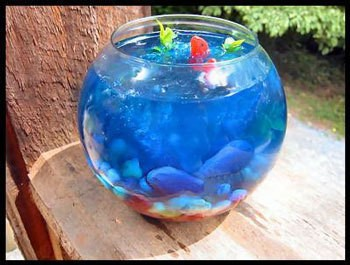 Fish bowl filled with Jello.