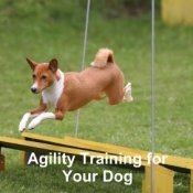agility training for your dog