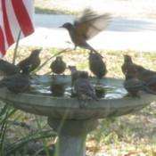Birdbath With Birds