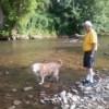 Barli, a Lab-St. Bernard mix, is walking in a stream with a man.