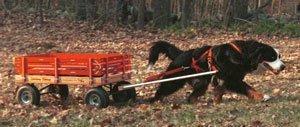 Bernese Pulling Cart