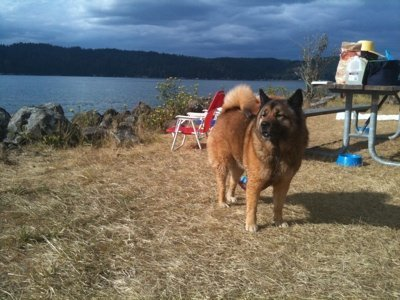 Maggie is a chow mix.