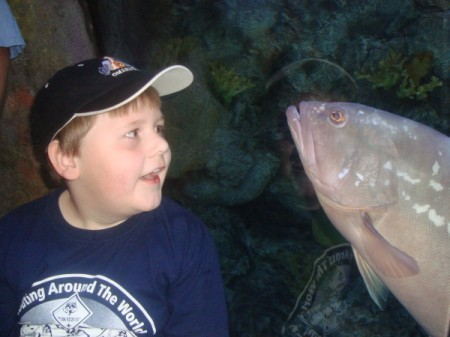 Fish following boy at the aquarium