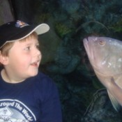 Fish following boy at the aquarium