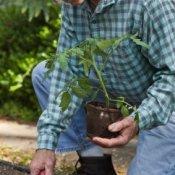 Man planting in a garden.