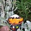 Homemade butterfly feeder in a garden