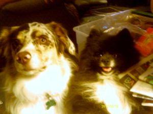 Dallas (Pomeranian) and Sadie (Australian Shepherd)