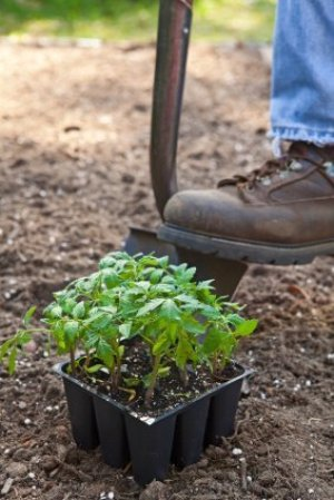 Foot and Shovel Digging to Plant in Garden