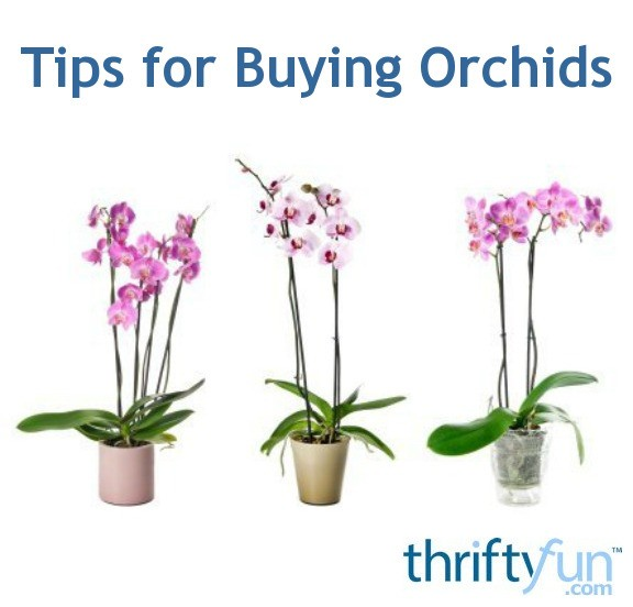 Up to 26% Off Selected Luxury Orchids. Fantastic offers at Orchids by Post - 'Up to 26% off selected Luxury Orchids'. There's never been a better time to shop with Orchids by Post and get your most wanted items. Shop and save today/5(48).