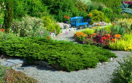 Dwarf Conifers in a Garden