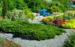 Dwarf Conifers in a Garden
