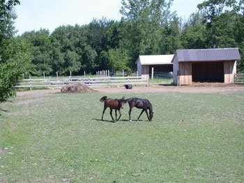 Two horses in a pasture.
