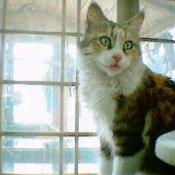 Mano the house cat.