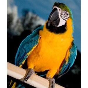 A parrot perched on a wooden dowel