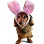 Dog with Easter bunny ears.