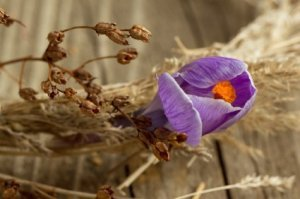 Dried Wreath With Crocus Flower