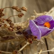 Dried Wreath With Crocus Flower