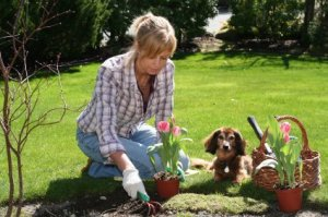 Discouraging Dogs from Marking Territory on Plants