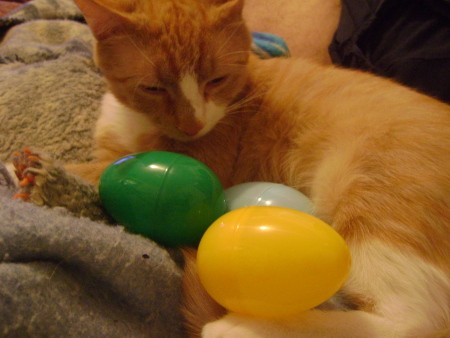 Peanut, an orange cat with plastic Easter eggs.