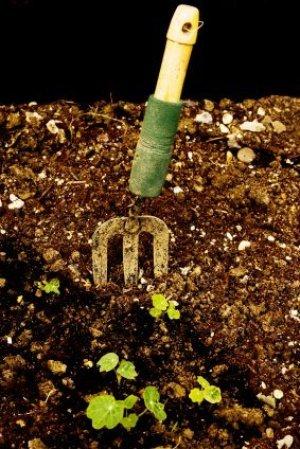 Garden Fork and Seedlings