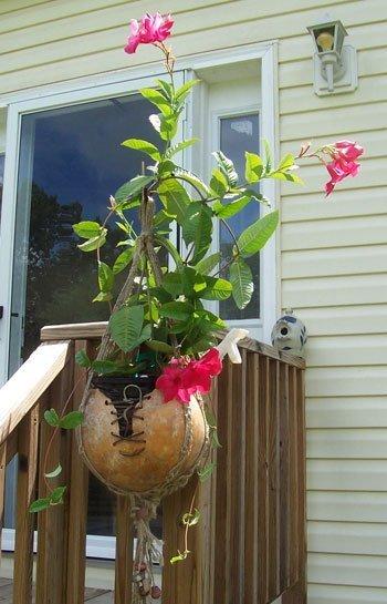 Gourd planter