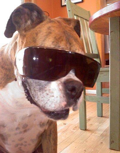 Lola (Boxer)