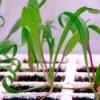 Plants growing under grow lights