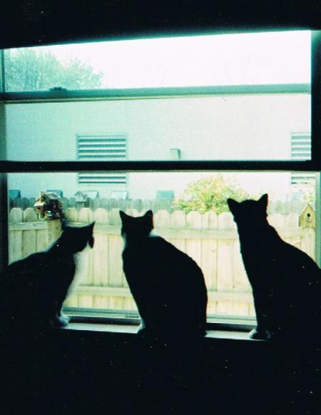 Jake, Duke and Shadow (Cats)