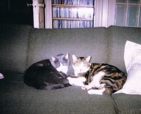 Duke and Rachel
