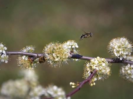 Bees Taking Flight (Oklahoma)