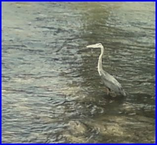 Beautiful Bird Fishing in the Water