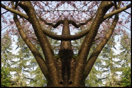 Cherry Tree Angel