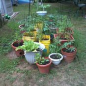 Container Gardening using recycled containers