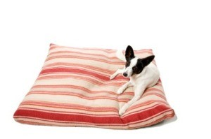 Dog on Homemade Pet Bed