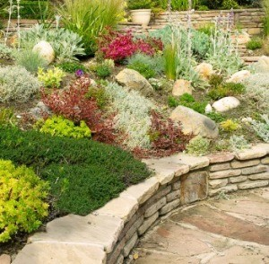 Garden with How to Alpine Plants