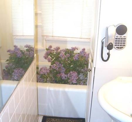Lilacs in the Bathtub