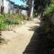 Red flowers blooming in the Path Garden.