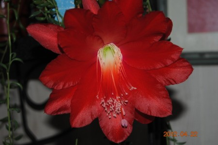 Blooming Houseplant