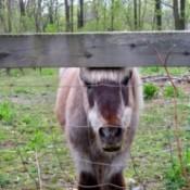 Photo of a pony.