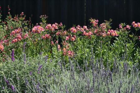 Spring English Garden