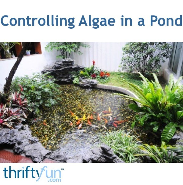 Controlling Algae in a Pond | ThriftyFun on small backyard designs, slope landscaping on a budget, landscaping on a tight budget, small backyard patio landscaping ideas, small backyard garden, backyard decorating ideas on a budget,
