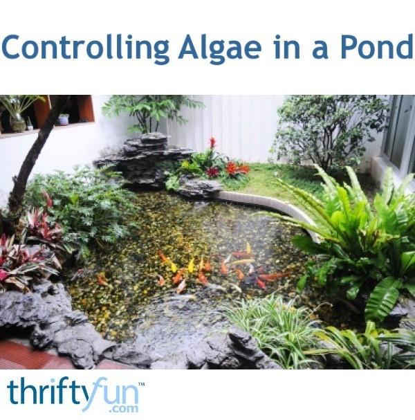 Controlling Algae In A Pond Thriftyfun