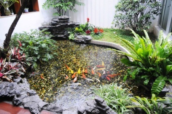 Controlling algae in a pond thriftyfun for Koi pond water murky